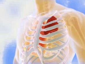 грудная клетка человека