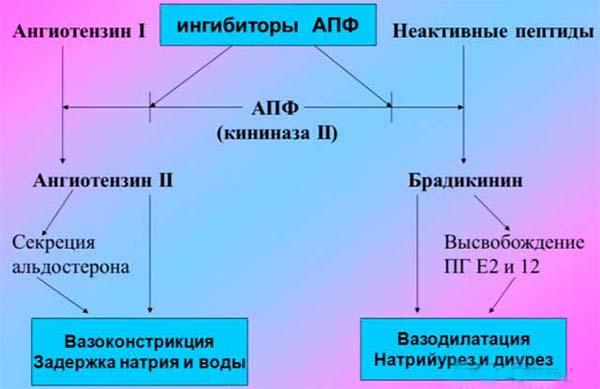 схема действия ингибиторов
