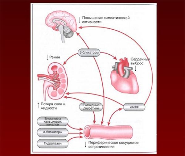 действие гипотензивных препаратов