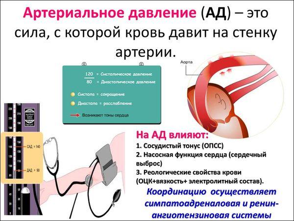 понятие об артериальном давлении