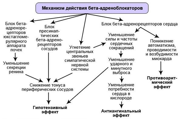 механизм дейсвия бета-блокаторов