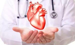 врач держит сердце