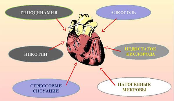факторы, негативно влияющие на сердце