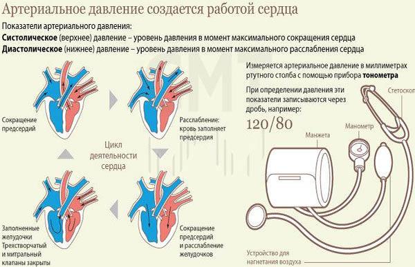 артеривльное давление