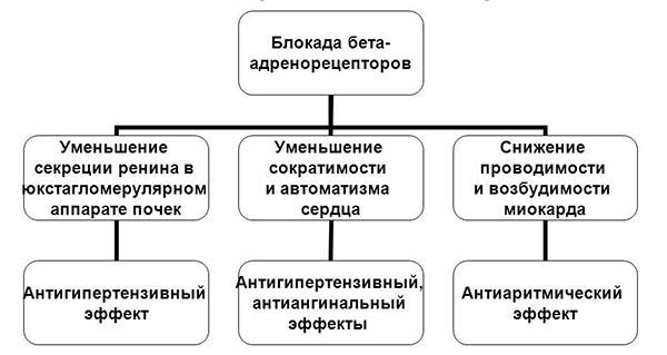 механизм действия бета-андреноблокаторов