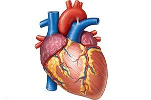 Почему периодически болит сердце thumbnail