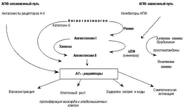механизм действия и классификация ингибиторов АПФ