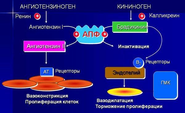 механизм действия ингибиторов апф