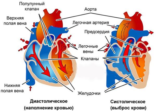 Изображение - Падает верхнее давление что делать krovyanoe-davlenie
