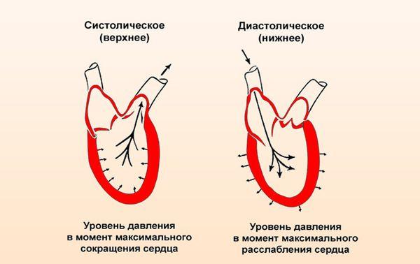 Изображение - Параметры давления у человека верхнее и нижнее kak-umenshit-nizhnee-arterialnoe-davlenie