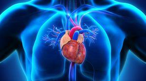 Изображение - 2 артериальное давление serdtse
